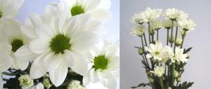 lineker white