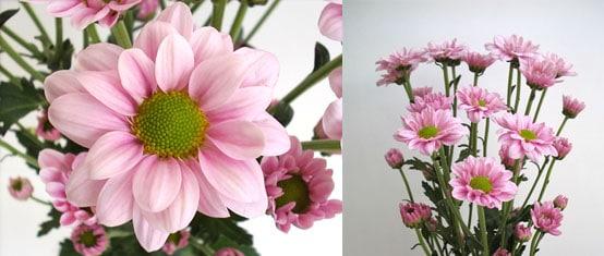 lineker pink